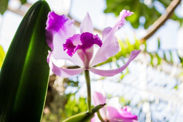 BotanicGardens-5