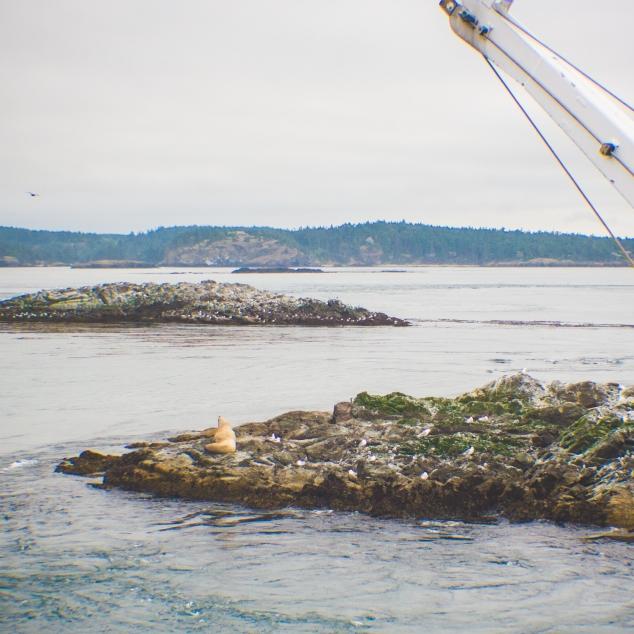 WhalewatchingTour-3